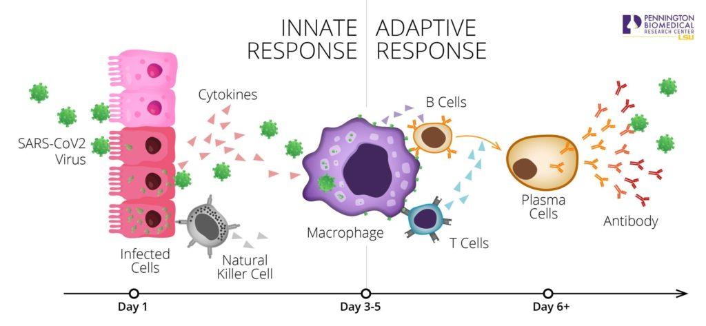 Companion Health's Innate and Adaptive Immune Responses